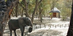 An Elephant Near a Forest Chalet